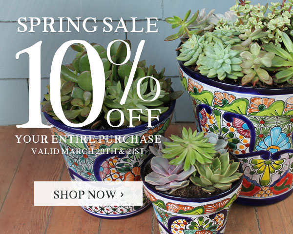 Spring Sale - 10% Off Your Entire Purchase