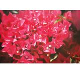 Bougainvillea Oil Painting on Canvas