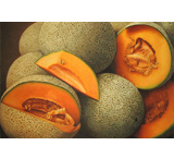 Cantaloupe Oil Painting on Canvas
