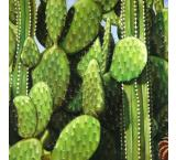 Cactus Garden Oil Painting on Canvas
